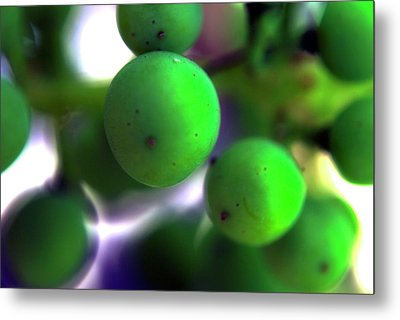 Grapes Metal Print by Bransen Devey