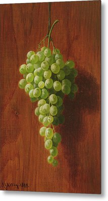 Grapes   Green Metal Print by Andrew John Henry Way