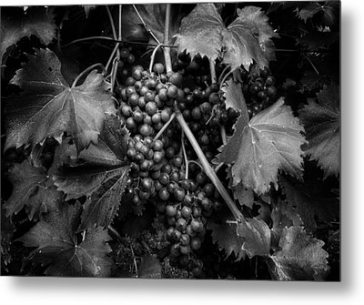 Grapes In Black And White Metal Print
