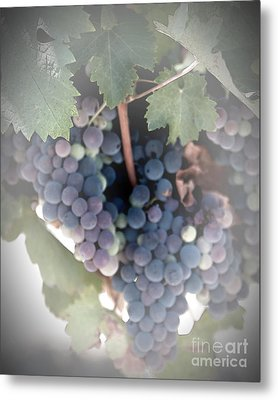 Grapes On The Vine I Metal Print by Sherry Hallemeier
