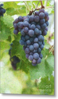 Grapes On The Vine Metal Print by Tim Gainey