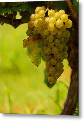 Grapes Metal Print by Travis Aston