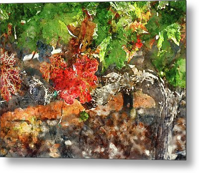 Grapevine In The Autumn Season Metal Print by Brandon Bourdages