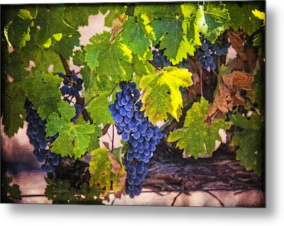 Grapevine With Texture Metal Print by Garry Gay