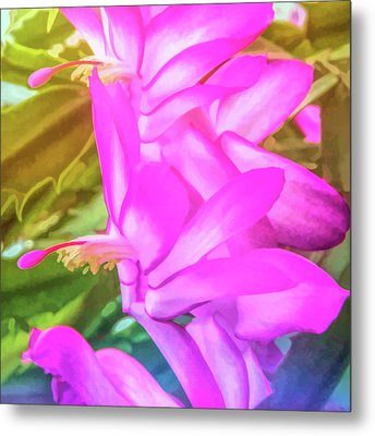 Metal Print featuring the photograph Graphic Rainbow Christmas Cactus Flower by Aimee L Maher Photography and Art Visit ALMGallerydotcom