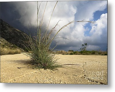 Grass Growing Out Of Crack In Tarmac Metal Print by Perry Van Munster