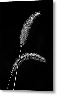 Grass In Black And White Metal Print