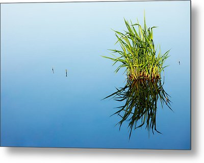 Grass In Blue Metal Print by Todd Klassy