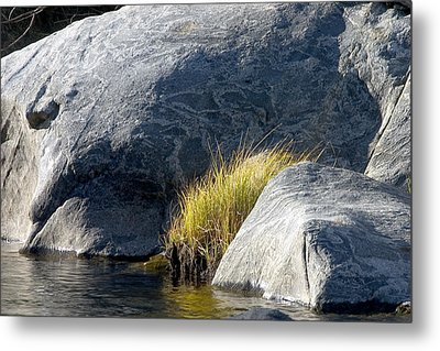 Metal Print featuring the painting Grass by Larry Darnell