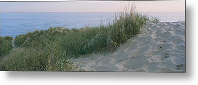 Grass On A Sand Dune, Indiana Dunes Metal Print by Panoramic Images