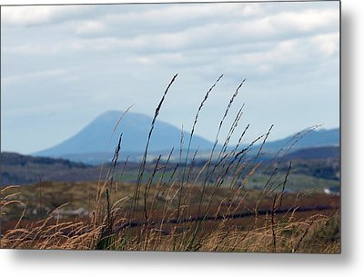 Grass Metal Print by Paul  Mealey