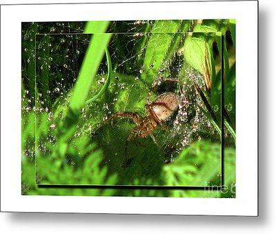 Grass Spider Metal Print by Deborah Johnson