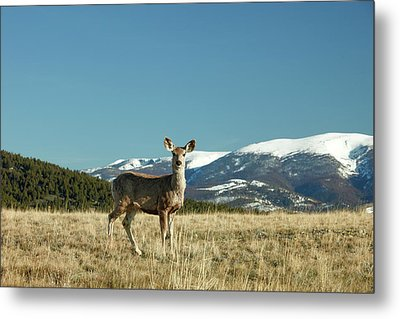 Grassy Mountain Deer Metal Print