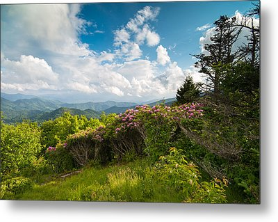 Grassy Ridge Roan Highlands Rhododendrons On The Appalachian Trail Metal Print by Rick Dunnuck