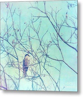 Gray Jay In A Tree Metal Print