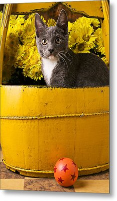 Gray Kitten In Yellow Bucket Metal Print by Garry Gay