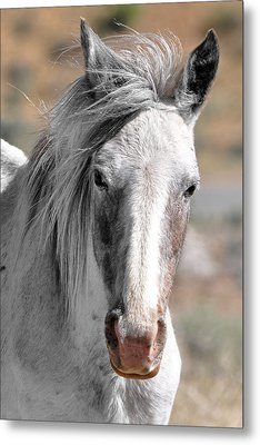 Gray Mare Metal Print by Lula Adams