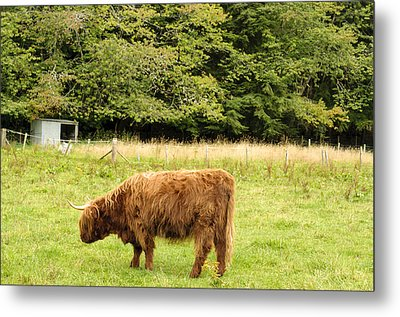 Metal Print featuring the photograph Grazing by Christi Kraft