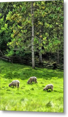 Grazing Sheep At Old World Wisconsin Metal Print by Christopher Arndt