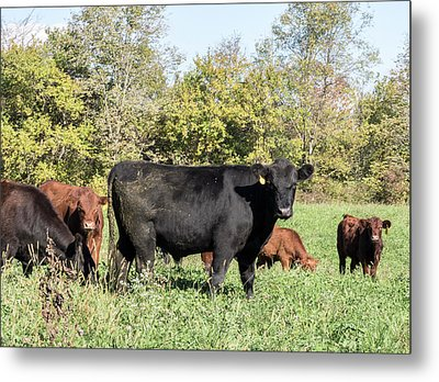 Grazing Metal Print by William Morris
