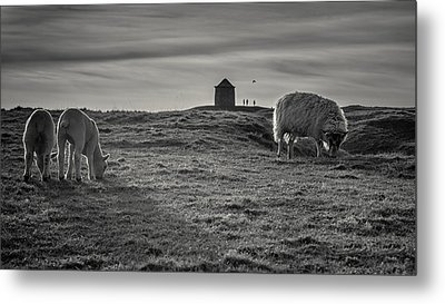 Grazing With The Family Metal Print