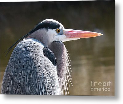 Great Blue Beauty Metal Print