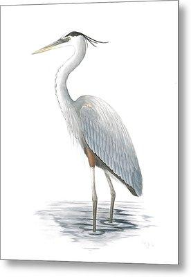 Great Blue Heron Metal Print by Anna Bronwyn Foley