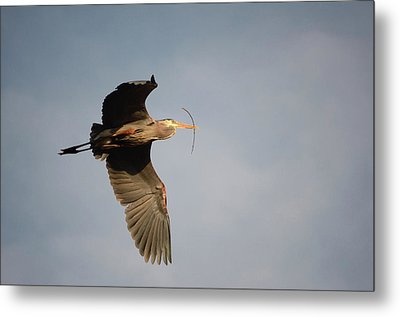 Metal Print featuring the photograph Great Blue Heron In Flight by Ann Bridges