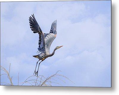 Great Blue Heron In Flight Metal Print by Keith Boone