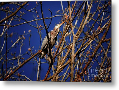 Metal Print featuring the photograph Great Blue Heron Nesting 2017 - 1 by Terry Elniski