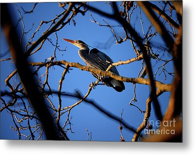 Metal Print featuring the photograph Great Blue Heron Nesting 2017 - 2 by Terry Elniski