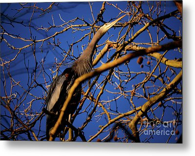 Metal Print featuring the photograph Great Blue Heron Nesting 2017 - 3 by Terry Elniski