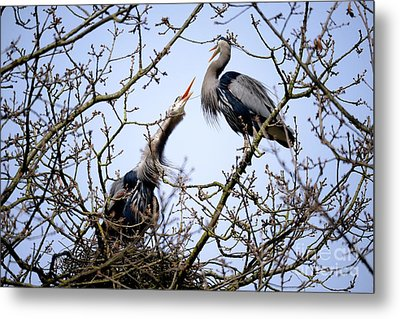 Metal Print featuring the photograph Great Blue Heron Nesting 2017 - 8 by Terry Elniski