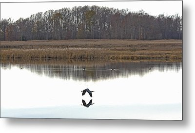 Great Blue Heron Over Glassy Water Metal Print