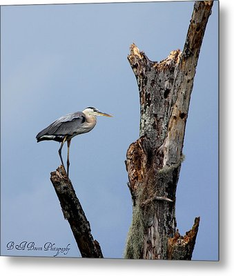 Metal Print featuring the photograph Great Blue Heron Perched by Barbara Bowen