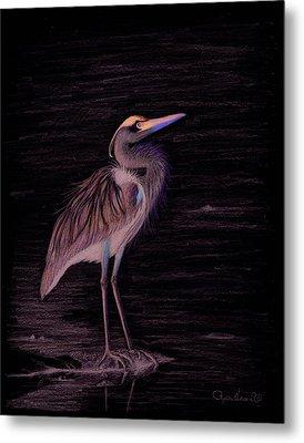 Great Blue Heron Metal Print by Phyllis Howard