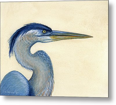 Great Blue Heron Portrait Metal Print by Charles Harden
