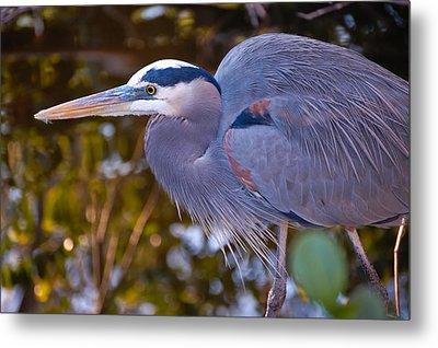 Great Blue Heron Metal Print by Rich Leighton