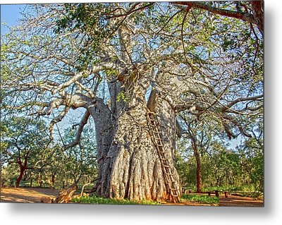 Great Boabab Tree Metal Print by Taschja Hattingh