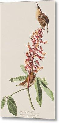 Great Carolina Wren Metal Print by John James Audubon