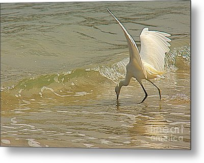 Metal Print featuring the photograph Great Egret 2 by Nicola Fiscarelli