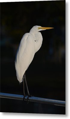 Great Egret At Night Metal Print by Zina Stromberg