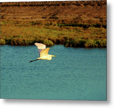 Great Egret In Flight Metal Print by Timothy Bulone