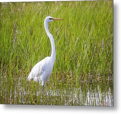 Metal Print featuring the photograph Great Egret In The Spring  by Ricky L Jones