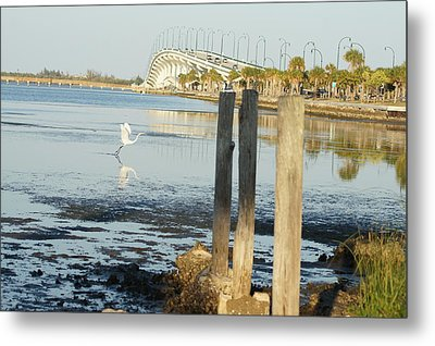 Metal Print featuring the photograph Great Egret Takes Flight by Lynda Dawson-Youngclaus