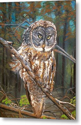 Great Grey Owl 2 Metal Print