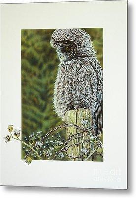 Great Grey Owl Metal Print by Greg and Linda Halom