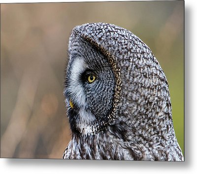 Great Grey's Profile A Closeup Metal Print by Torbjorn Swenelius