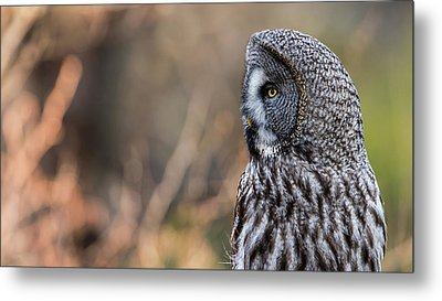 Great Grey's Profile Metal Print by Torbjorn Swenelius