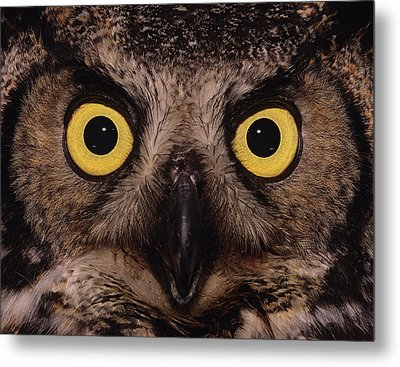 Great Horned Owl Face Metal Print by Tony Beck